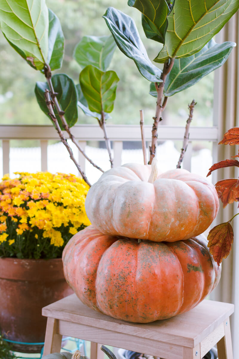 fall-flowers-and-pumpkins