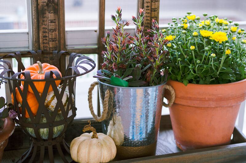 fall-plants-and-pumpkins