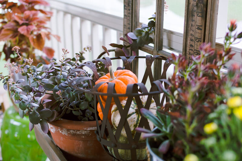 fall-plants-and-mini-pumpkins