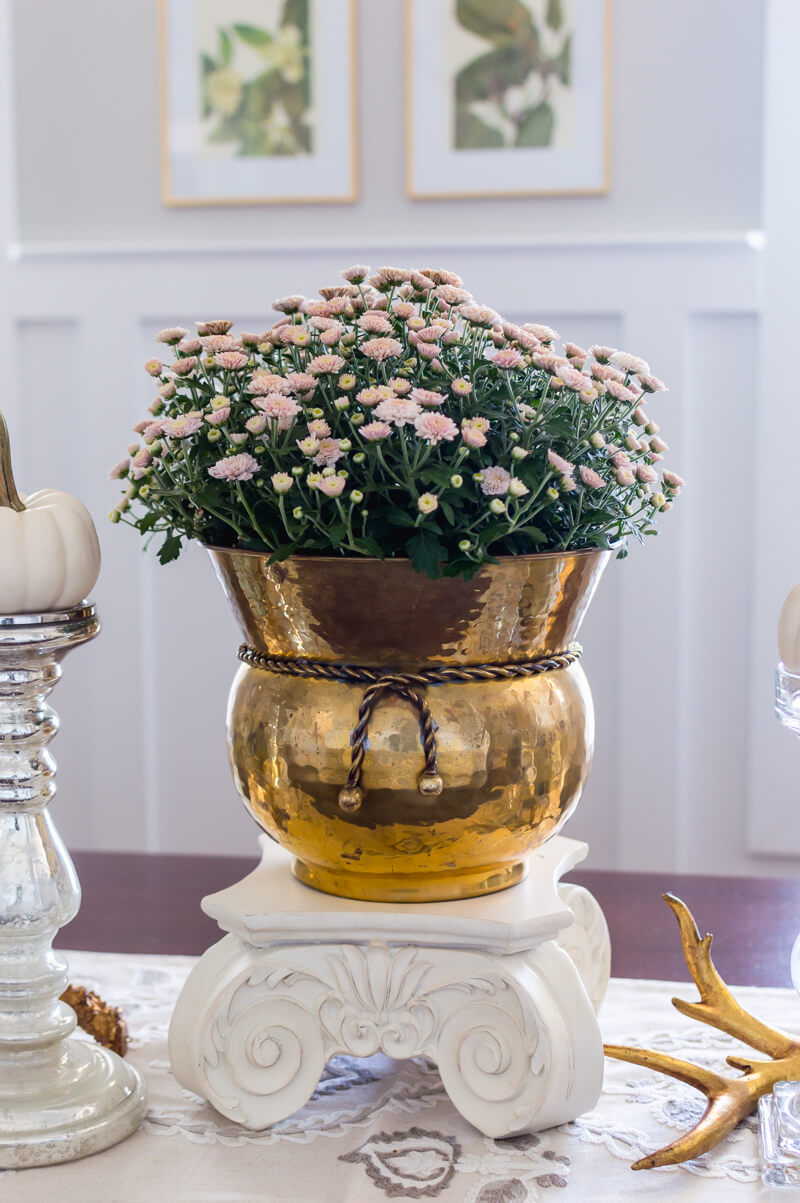 White Fall Mums in Brass Planter