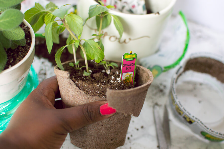 biodegradable pot for easy windowsill herb garden