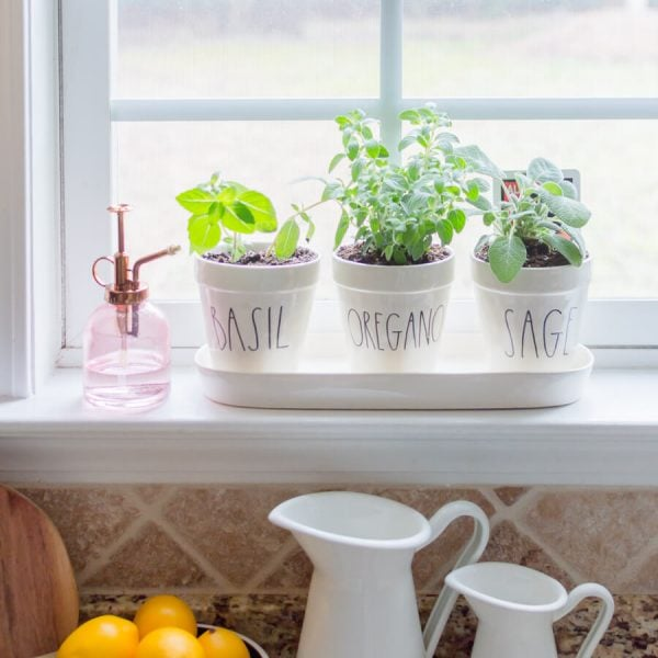 easy DIY windowsill herb garden