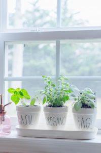 Easy DIY kitchen herb garden
