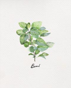 Free Herb Printables Basil