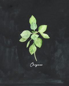 Free Herb Printables Chalk Oregano