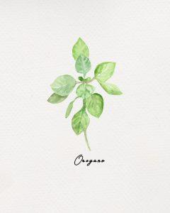 Free Herb Printables Oregano