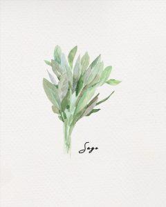 Free Herb Printables Sage