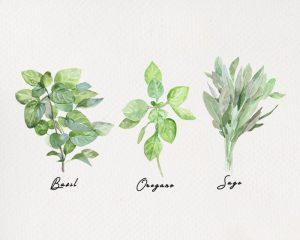 Free Herb Printables Trio