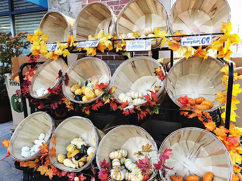 Pumpkin at Trader Joes