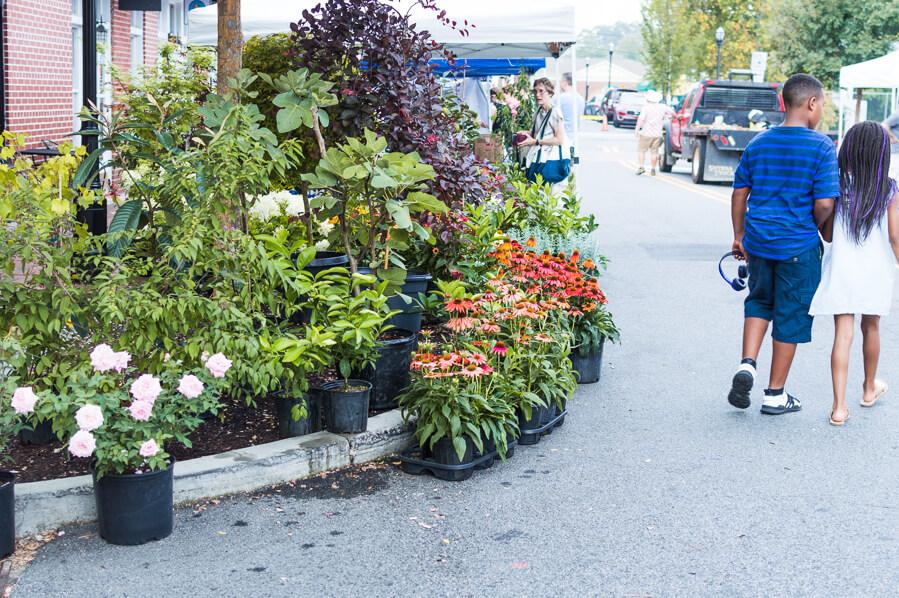 Marietta Square Farmers Market Plants