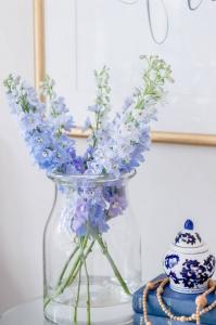 Blue Snapdragon Flower