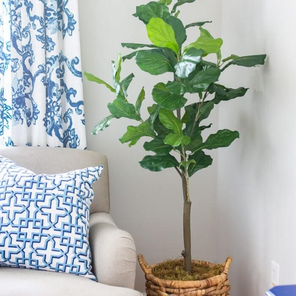 Faux Fiddle Fig Plant