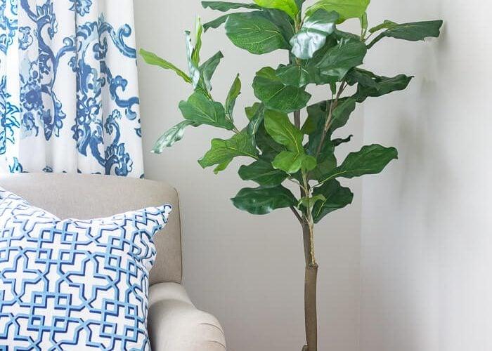 Faux Fiddle Fig Plant